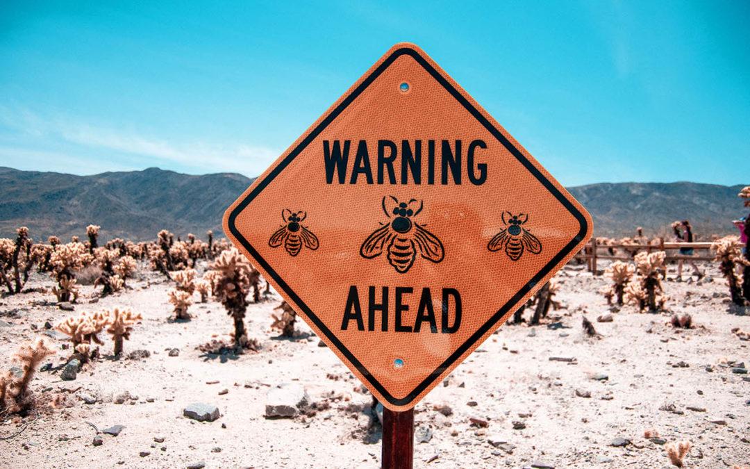 Bohol Bee Farm, ce lieu qui fait le buzz